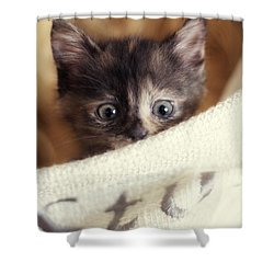 Shower Curtain featuring the photograph In The Hamper by Amy Tyler