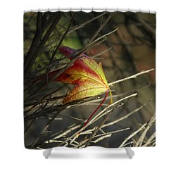 Caught In The Wind Shower Curtain by Donna Blackhall