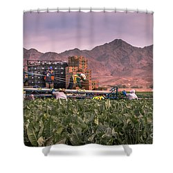 Cauliflower Harvest Shower Curtain