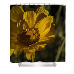 Cave Creek Beauty And Shadows Shower Curtain