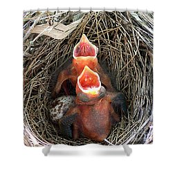 Cavernous Cardinals Shower Curtain