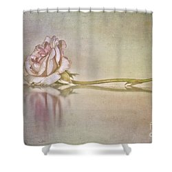 Cecile Brunner Shower Curtain by Linda Lees