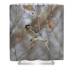 Cedar Wax Wing 2 Shower Curtain by David Arment