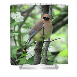 Cedar Wax Wing Shower Curtain by Alison Gimpel