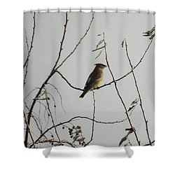 Cedar Wax Wing In Tree Shower Curtain by Kenneth Willis