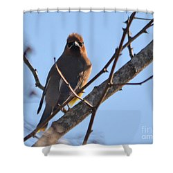 Cedar Wax Wing On The Lookout Shower Curtain by Barbara Dalton