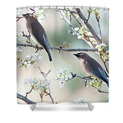 Cedar Wax Wing Pair Shower Curtain by Jim Fillpot