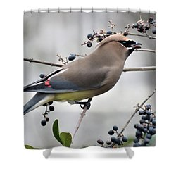 Cedar Waxwing 2 Shower Curtain