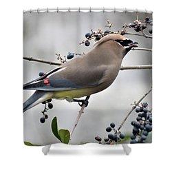 Cedar Waxwing 2 Shower Curtain