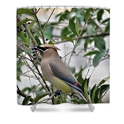 Cedar Waxwing 3 Shower Curtain