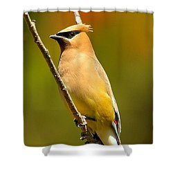 Cedar Waxwing Shower Curtain by Adam Jewell