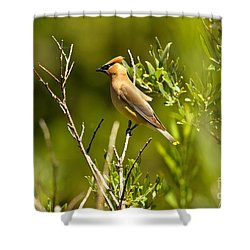 Cedar Waxwing At Glacier Shower Curtain by Adam Jewell