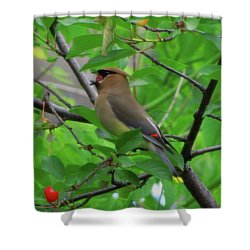 Cedar Waxwing Shower Curtain