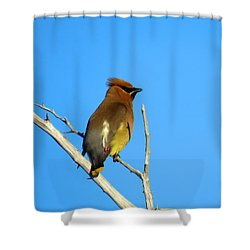 Cedar Waxwing Shower Curtain by Dianne Cowen