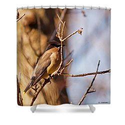 Cedar Waxwing In Autumn Shower Curtain