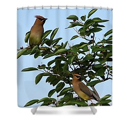 Cedar Waxwing Pair Shower Curtain by Mark A Brown