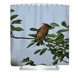 Cedar Waxwing Profile Shower Curtain