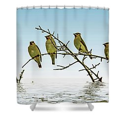 Cedar Waxwings On A Branch Shower Curtain by Geraldine Scull