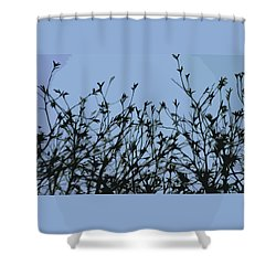 Celebration -  Shower Curtain
