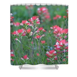 Celebration Of Paintbrushes Shower Curtain by Carolina Liechtenstein