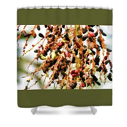 Celebration, Pygmy Date Palm - Shower Curtain