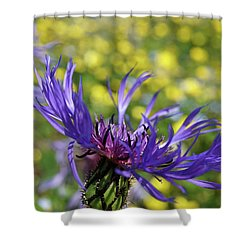 Centaurea Montana Flower Shower Curtain