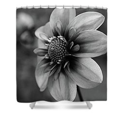 Center Attraction Shower Curtain by Sheila Ping
