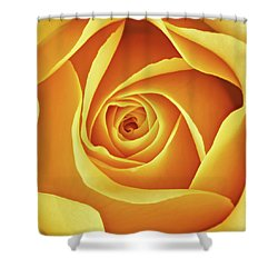 Center Of A Yellow Rose Shower Curtain