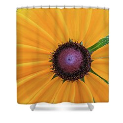 Shower Curtain featuring the photograph Center Stage by David Coblitz