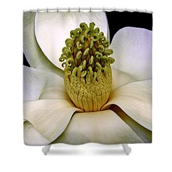 Shower Curtain featuring the photograph Centerpiece - Magnolia Blossom 010 by George Bostian