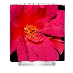 Shower Curtain featuring the photograph Centerpiece - Pink Begonia 007 by George Bostian
