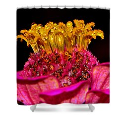 Centerpiece - Zinnia Crown 001 Shower Curtain