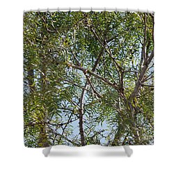 Shower Curtain featuring the photograph Central Texas Sky View Through Mesquite Trees by Ray Shrewsberry