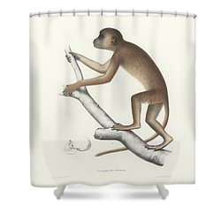 Central Yellow Baboon, Papio C. Cynocephalus Shower Curtain