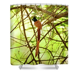 Ceylon Paradise Flycatcher Shower Curtain