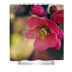 Chaenomeles Shower Curtain by Kharisma Sommers