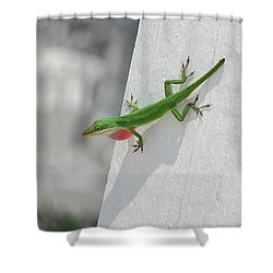 Chameleon Shower Curtain by Robert Meanor