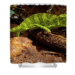Chameleon Struts His Stuff Shower Curtain