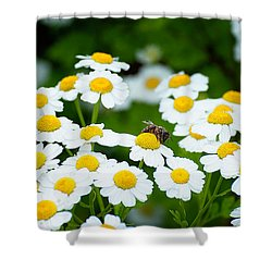Chamomile Pollinating Shower Curtain
