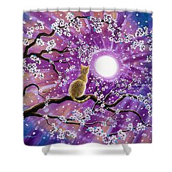Champagne Tabby Cat In Cherry Blossoms Shower Curtain