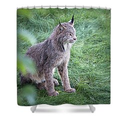 Champion Mama Lynx Shower Curtain