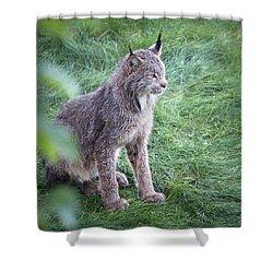 Champion Mama Lynx Shower Curtain