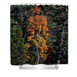 Change Of Seasons Shower Curtain by Elaine Malott