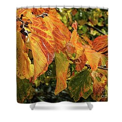 Shower Curtain featuring the photograph Changes by Peggy Hughes