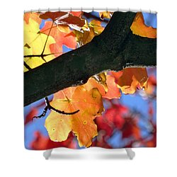 Changing Of The Colors Shower Curtain by Mikki Cucuzzo