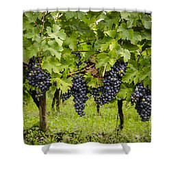 Chardonnay Grape Cluster Shower Curtain by Perry Van Munster