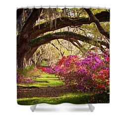 Charleston Sc Magnolia Plantation Gardens - Memory Lane Shower Curtain by Dave Allen