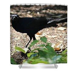 Charleston Wildlife. Black Bird Shower Curtain
