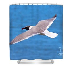 Charleston Wildlife. Seagull Shower Curtain