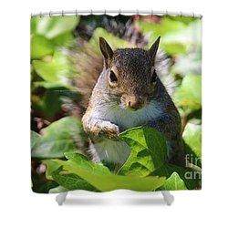 Charleston Wildlife. Squirrel Shower Curtain